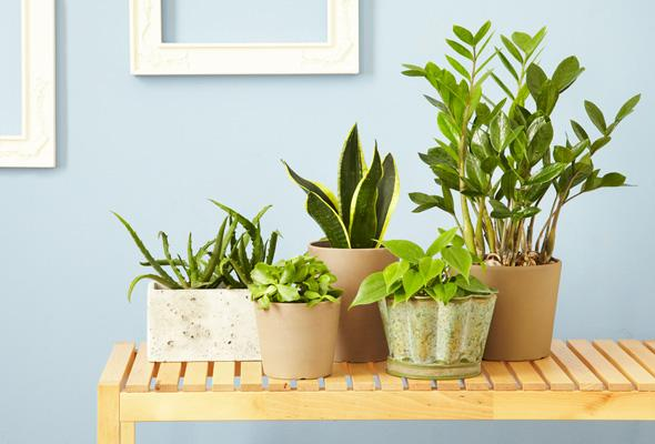 Indoor Plants Your Plant Doctor