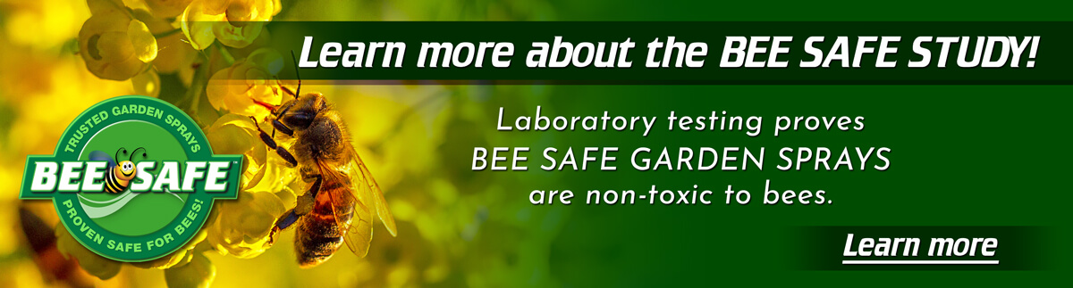 beesafe logo over image of a bee collecting pollen from a yellow berberis aquiforlium bell flower